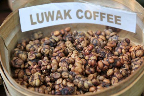 Kopi Mahal Luwak Coffee