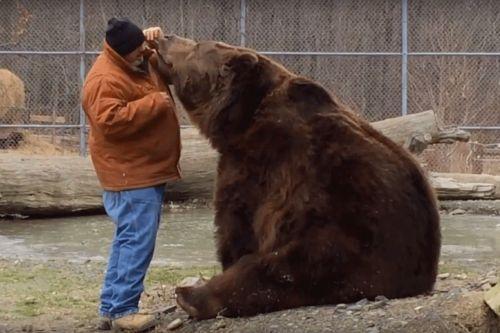 Beruang Raksasa